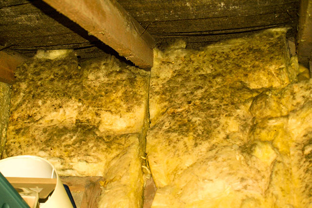 Mould & Moisture In Your Attic